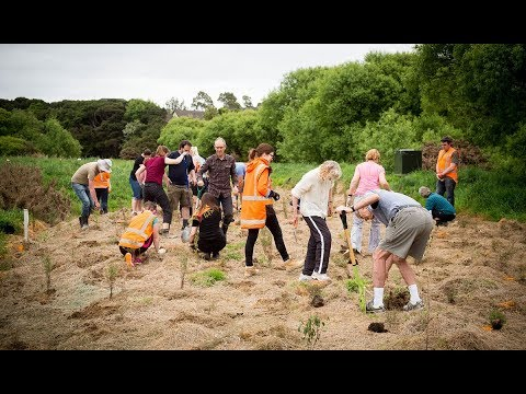 Community planting day – October 2017