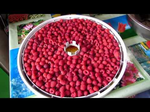 Как засушить ягоды малины в домашних условиях