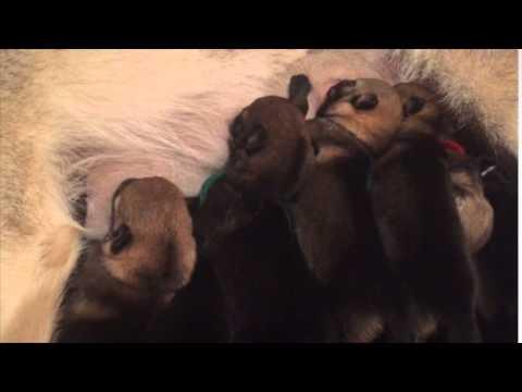Vendita cuccioli selezionati