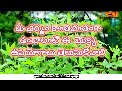 Plants for glowing skin   medicinal plants   Srigandham  pimple free skin how to reduce dark circles