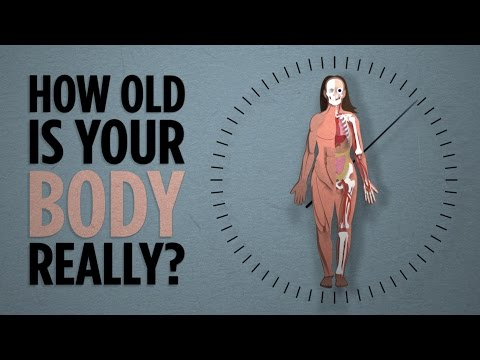 Your Body's Real Age | NPR's SKUNK BEAR