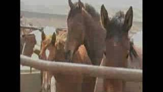 Shelby (MT) United States  city pictures gallery : Animals' Angels Shelby Horse Feedlot Investingation