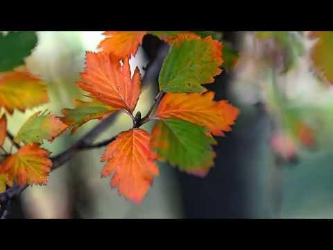 Человек и осень
