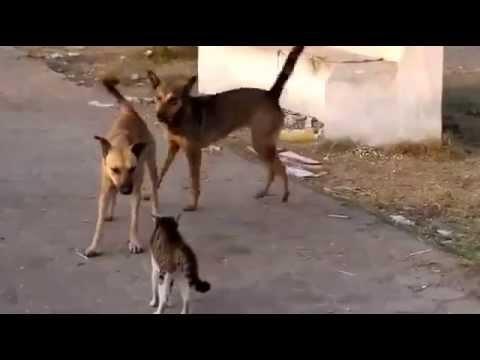 රියලිටි ෂෝ.. CATS & DOGS දැකලා නැත්තං බලාගන්න
