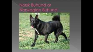 Dog Breed Name Cross Reference part 10-N,O