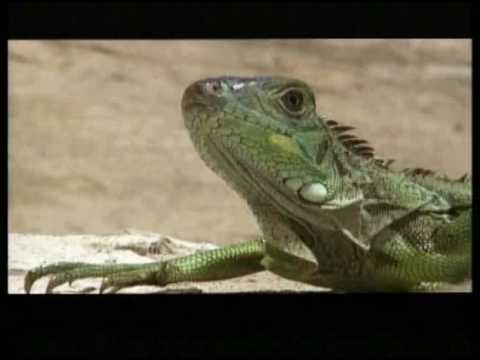 GR8 Banned Commercial!!! SURVIVAL (888) 521-4343 Funny Commercials ...