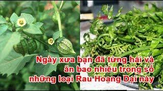 Ngày xưa bạn đã từng hái và ăn bao nhiêu trong số những loại rau hoang dại nàyrau hoang dại, rau dại, trồng rau dại, cách trồng rau dại, các loại rau dại, rau rừng, các loại rau rừngtheo khampha.vn