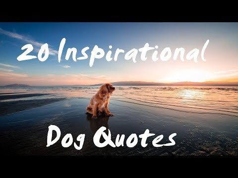 Family quotes - Dog Quotes - Inspirational Dog Quotes