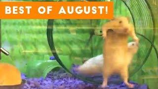 Video Funniest Pet Reactions & Bloopers of August 2017   Funny Pet Videos MP3, 3GP, MP4, WEBM, AVI, FLV Oktober 2018