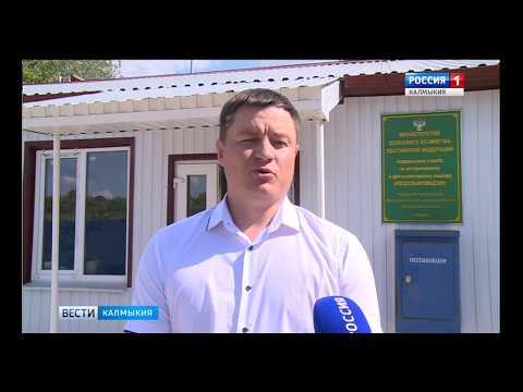 В Ростовской области в 6 образцах рыбы обнаружены паразитические объекты