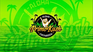 Hump Day Smoke Sesh #496- Live Bud Review & 4/20 Livestream Included by Primo Kush