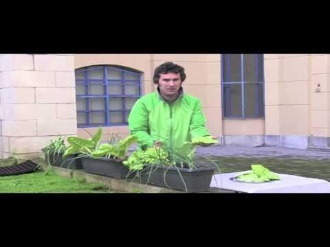 Cómo cosechar en el balcón//Balcón comestible//LlevamealhuertoTv