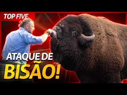 OS CINCO MAIORES SUSTOS QUE JA TOMEI COM ANIMAIS SELVAGENS! | RICHARD RASMUSSEN