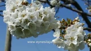 eynesil tanıtım klibi  2015  yasin sofu  www.eynesilajans.com