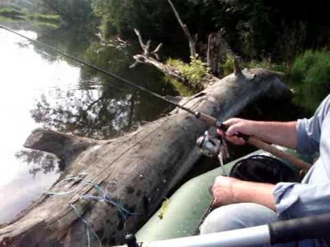видео ловля сомов северский донец