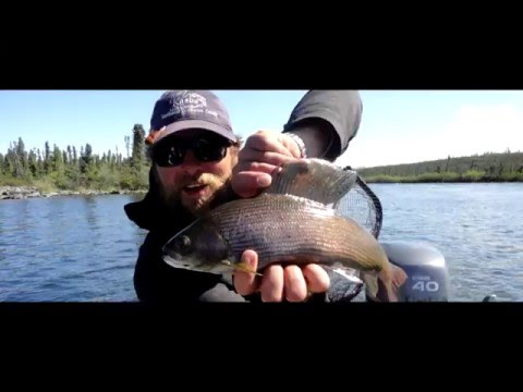 Watch: Arctic Grayling Fishing