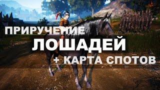 Black Desert - Приручение лошадей + карта спотов