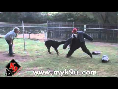 Personal Protection Dog - Doberman