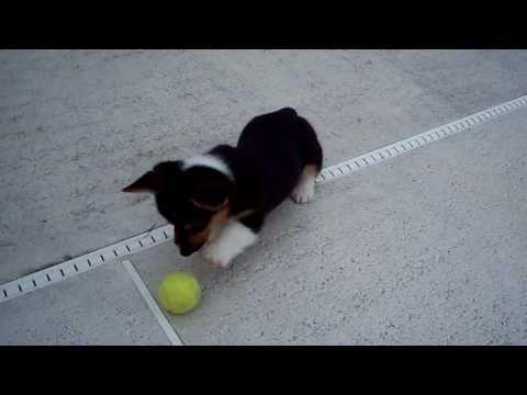 il-cucciolo-e-la-sua-prima-pallina-95