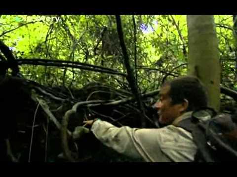 Bear Grylls - Vietnam