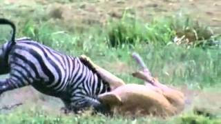 Топ 10 убийст в мире животных