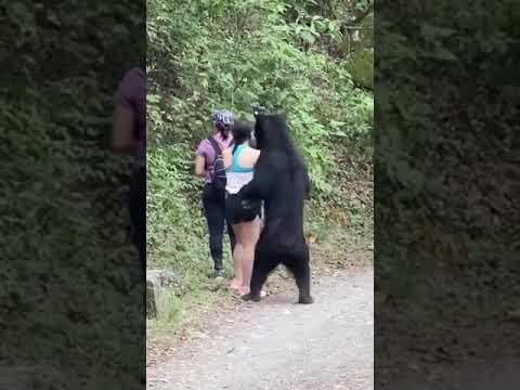 Spotkany niedźwiedź na szlaku próbuje się zaprzyjaźnić