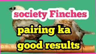 Society Finches pairing ki good progress