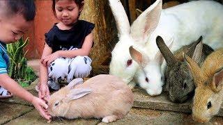 Download Video Yuk Kasih Makan Kelinci Lucu!!! - Mengenal Hewan & Liburan Sekolah di Batu Malang Taman Kelinci MP3 3GP MP4