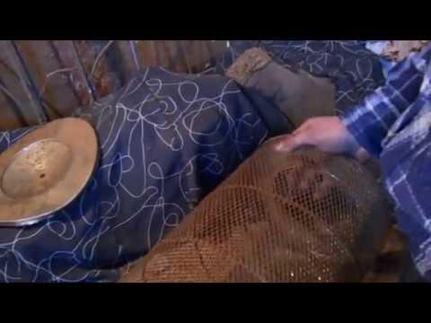 как ловить гольяна мордушкой