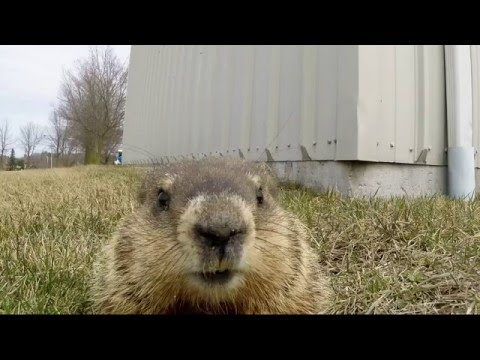 Curious Gopher Investigates A GoPro Camera