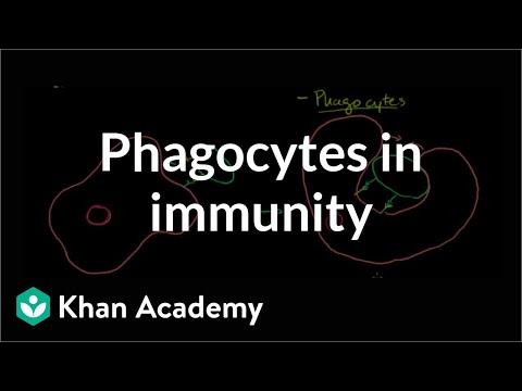 Biology: Immunology