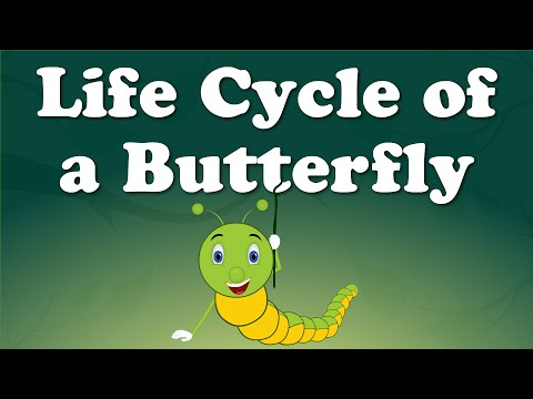 Life Cycle of a Butterfly | #aumsum #kids #education #lifecycle #butterfly