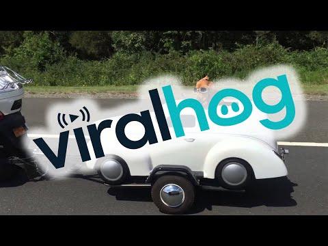 reazione spettacolare di questo cane sul sidecar