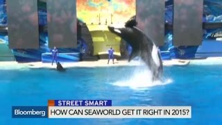 How Can SeaWorld Get It Right In 2015?