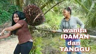 Video wanita tangguh pekerja kebun kelapa sawit MP3, 3GP, MP4, WEBM, AVI, FLV Januari 2019