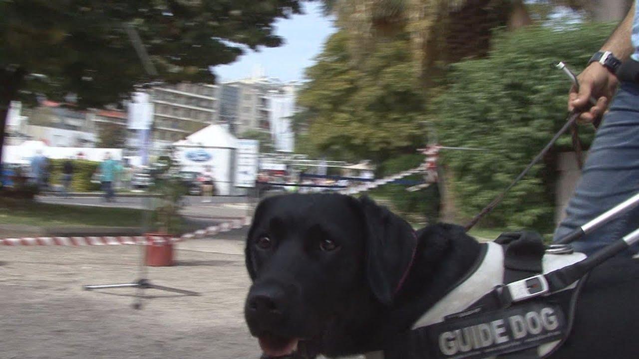 Σκύλοι Οδηγοί στην 81η ΔΕΘ
