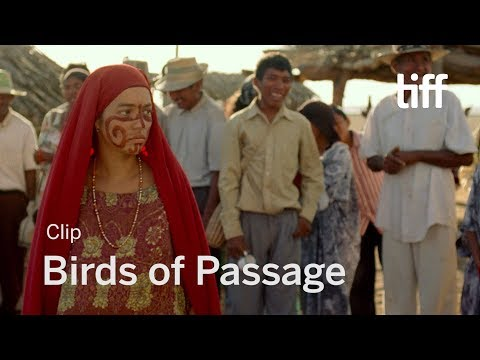 BIRDS OF PASSAGE Clip | TIFF 2018