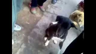 Tarapith India  City new picture : cute dog of Tarapith, INDIA,begs from tourist. Tarapith. India.