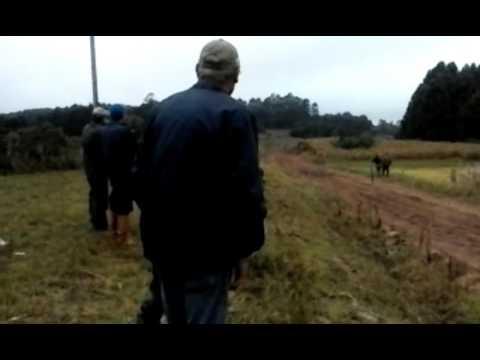 Corrida de cavalo em chuvisca RS