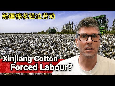 Xinjiang Cotton Forced Labour Regime // 新疆棉花强迫劳动政权 видео