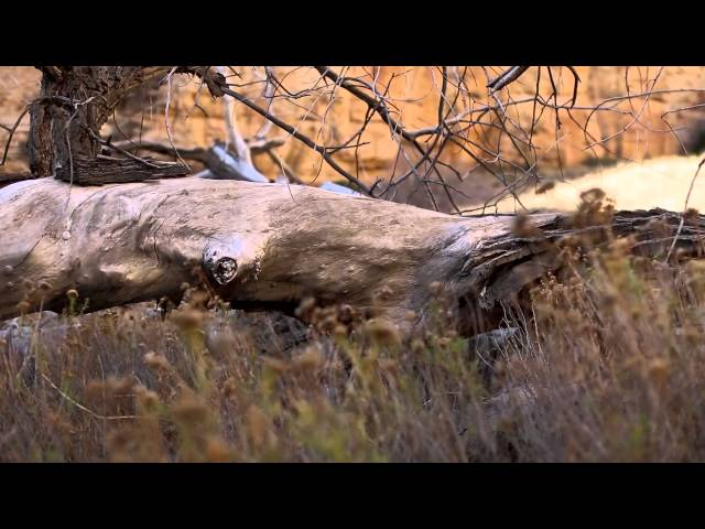 Restoring Utah's Escalante River