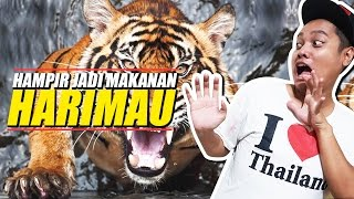 Video DI KEJAR MACAN TAMAN SAFARI | Laurent Rando MP3, 3GP, MP4, WEBM, AVI, FLV Oktober 2018