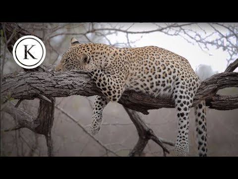 A Safari in Kruger National Park, South Africa