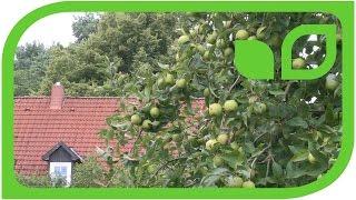 Führung mit dem Obstzüchter durch den Ippenburger Küchengarten: Rückschnitt der Obstbäume