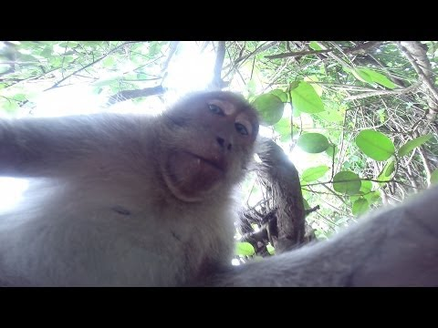 Ha! Monkey Steals This Guys Camera And Takes A #Selfie [WATCH]