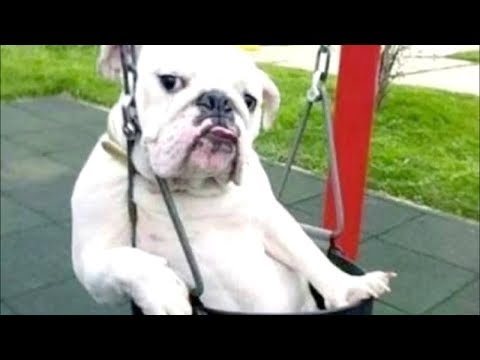Funny Dogs Behaving Like Humans - Dogs Acting like Humans || BEST OF