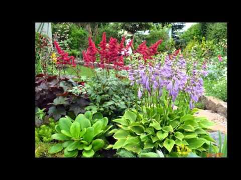 Неприхотливые садовые цветы сайт