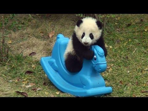 baby-panda-sul-cavallo-a-dondolo