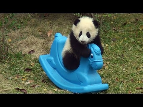 Panda baby playing on a Rocking Horse