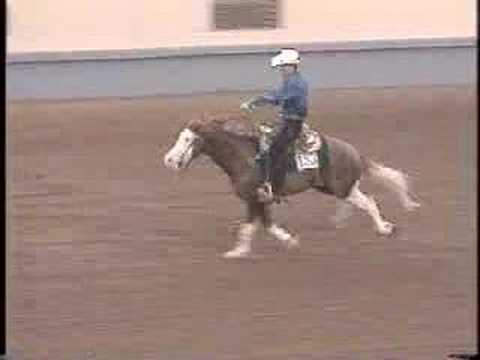 gunner - APHA Horse Gunner, Colonels Smoking Gun. The first Painthorse in the NRHA.